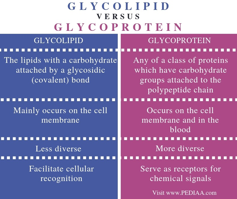 Difference Between Glycolipid and Glycoprotein - Comparison Summary