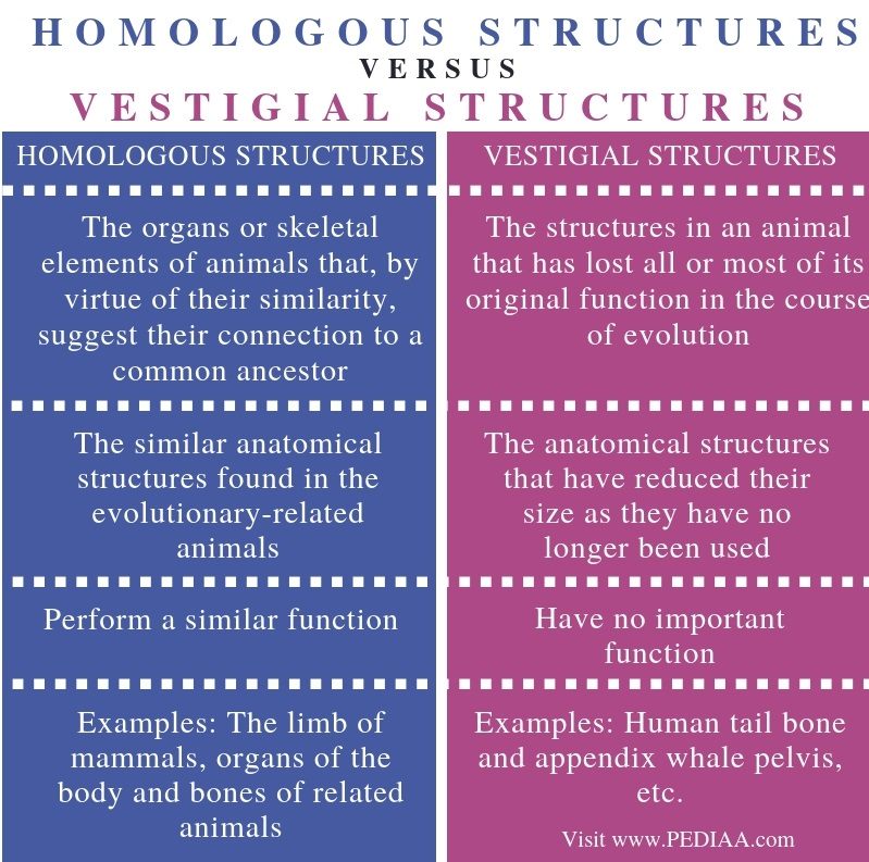 Difference Between Homologous Structures and Vestigial Structures - Comparison Summary (1)