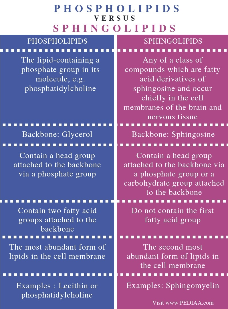 Difference Between Phospholipids and Sphingolipids - Comparison Summary