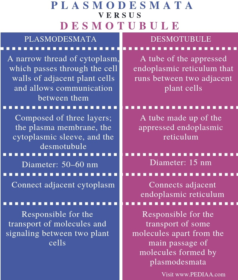 Difference Between Plasmodesmata and Desmotubule - Comparison Summary