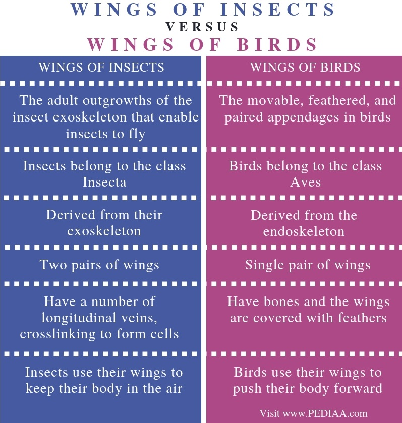 Difference Between Wings of Insects and Birds - Comparison Summary
