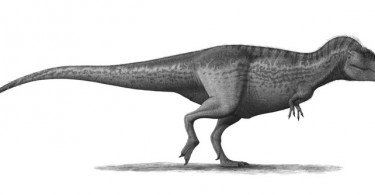 Difference Between Allosaurus and Tyrannosaurus