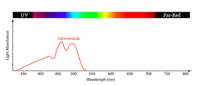 Difference Between Fluorophore and Chromophore