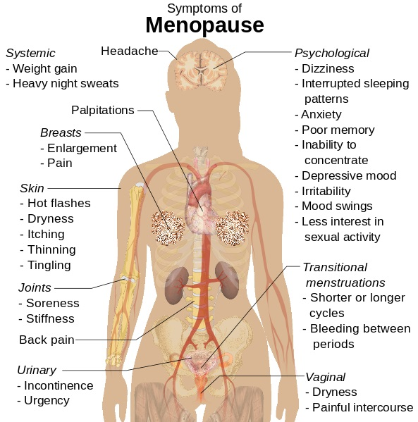 What is the Difference Between Perimenopause and Menopause