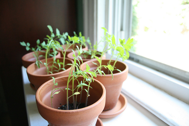 What is the Difference Between Phototropism and Geotropism