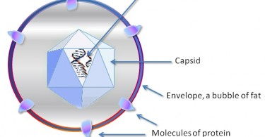 What is the Difference Between Virus and Viroids
