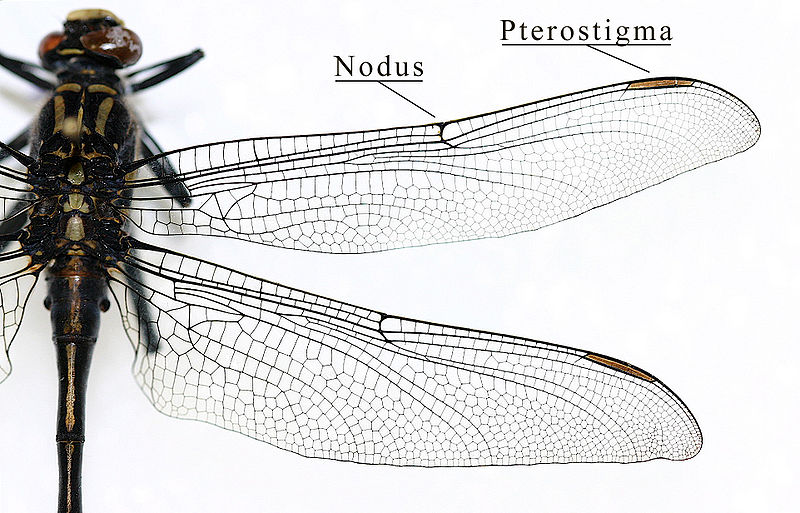 What is the Difference Between Wings of Insects and Birds