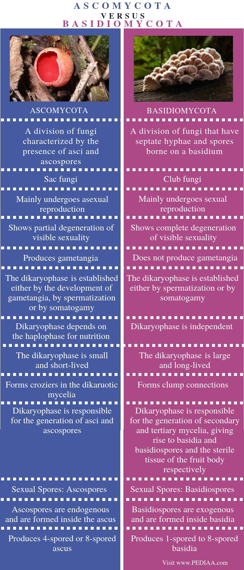 Difference Between Ascomycota and Basidiomycota - Comparison Summary