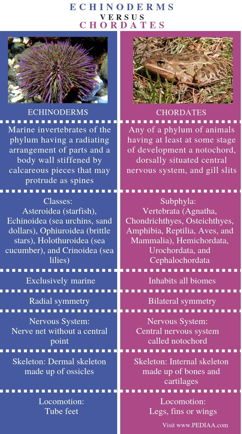 Difference Between Echinoderms and Chordates - Comparison Summary
