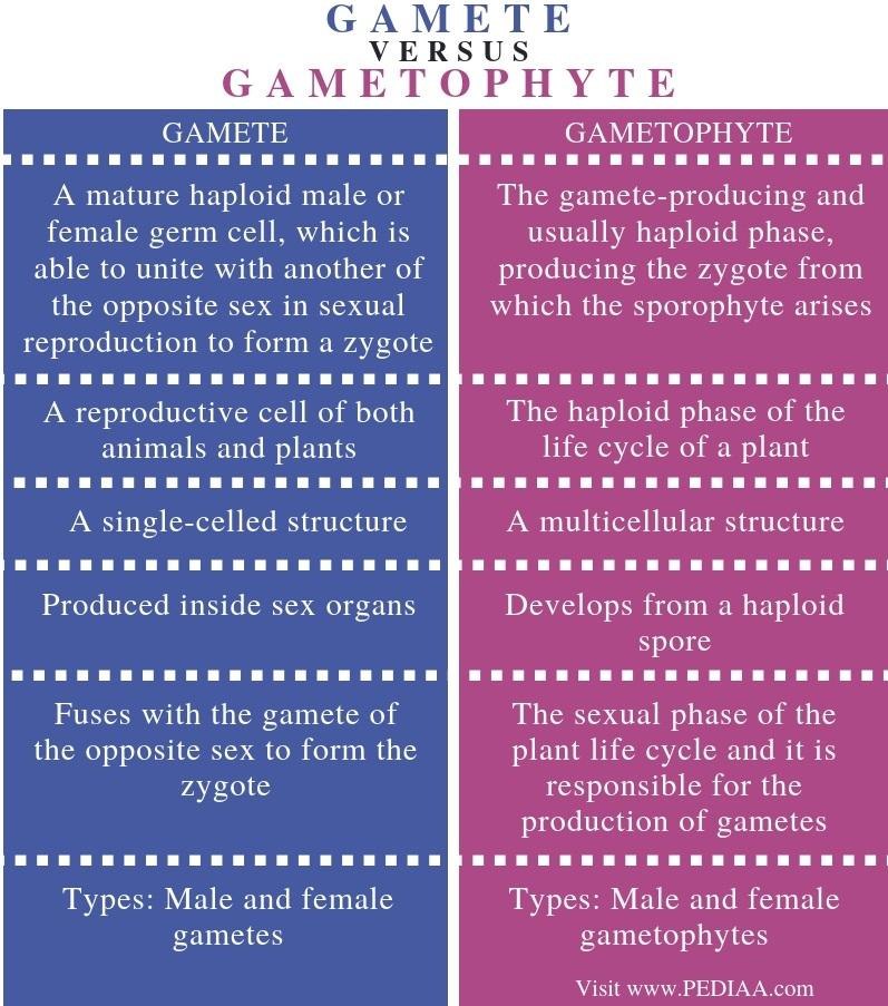 Difference Between Gamete and Gametophyte - Comparison Summary