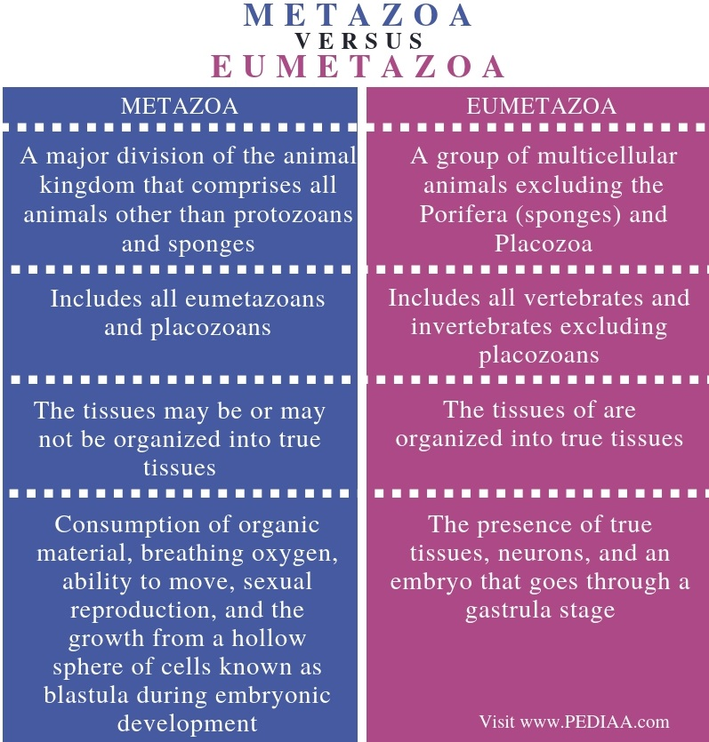 Difference Between Metazoa and Eumetazoa - Comparison Summary