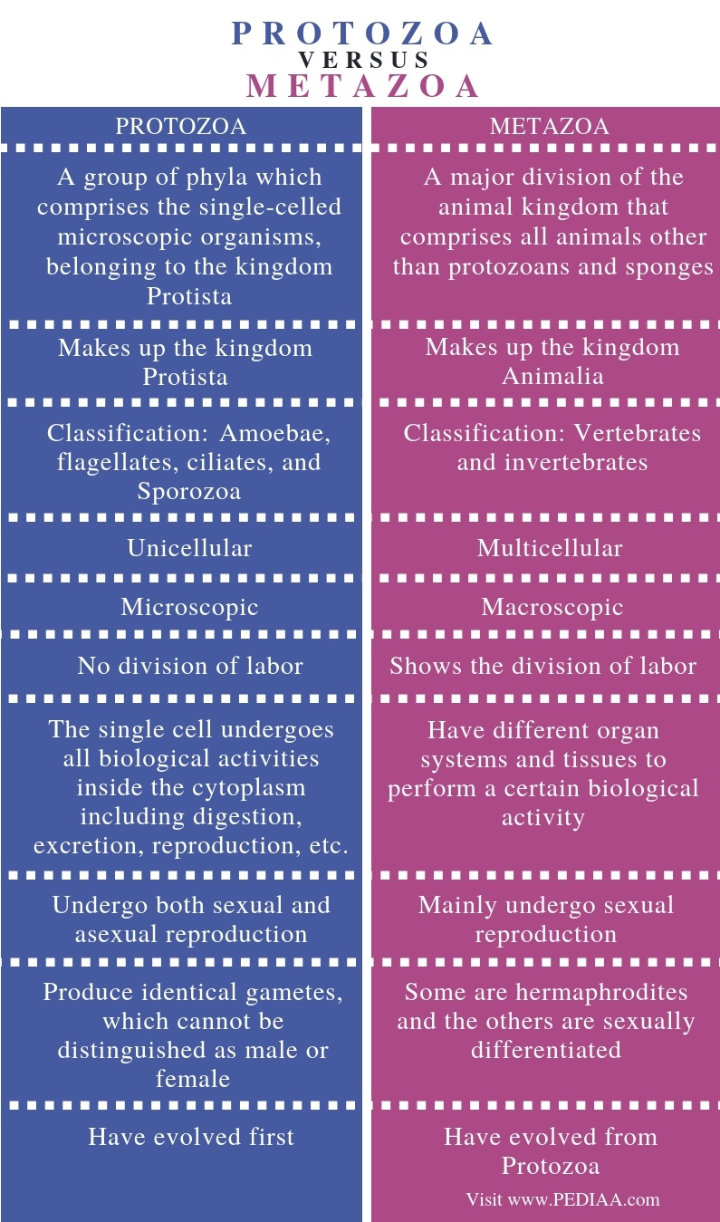 Difference Between Protozoa and Metazoa - Comparison Summary