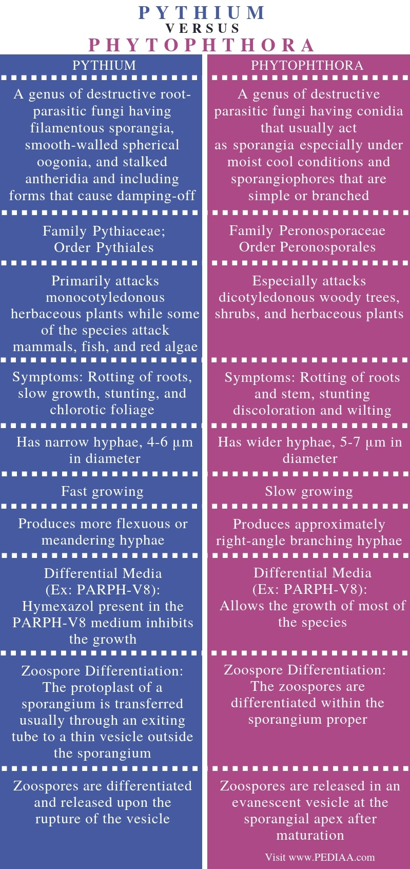 Difference Between Pythium and Phytophthora - Comparison Summary