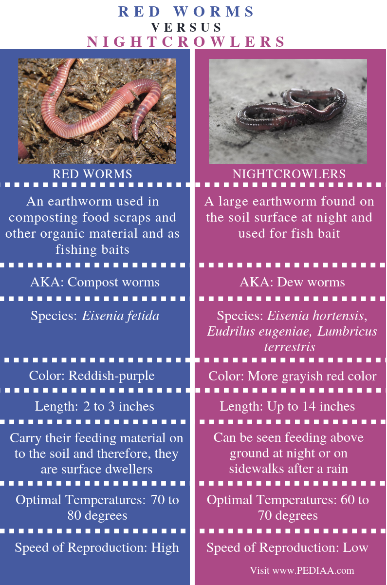Difference Between Red Worms and Nightcrawlers - Comparison Summary