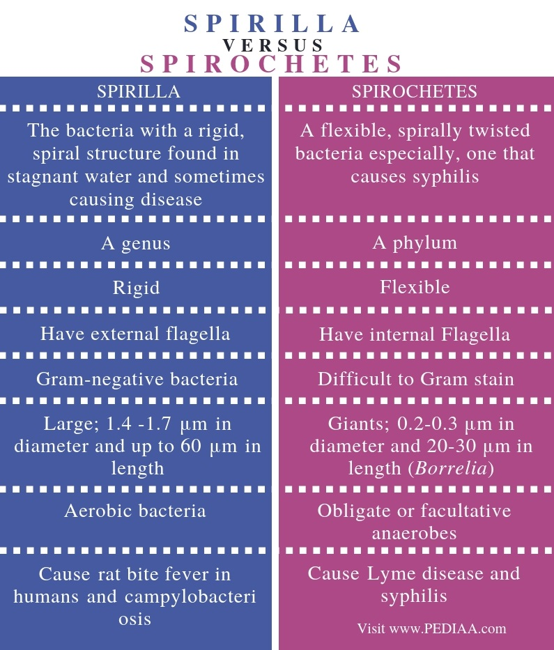 Difference Between Spirilla and Spirochetes - Comparison Summary