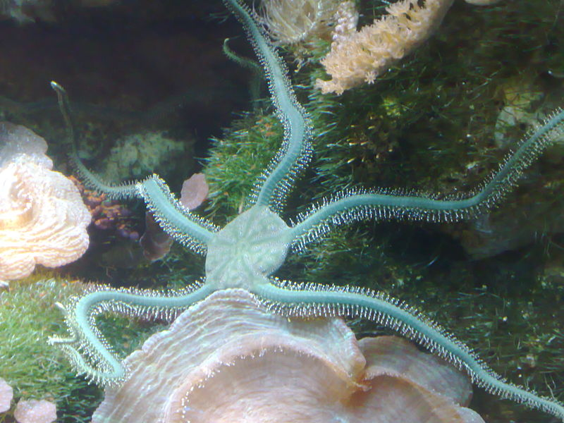 What is the Difference Between Echinoderms and Chordates