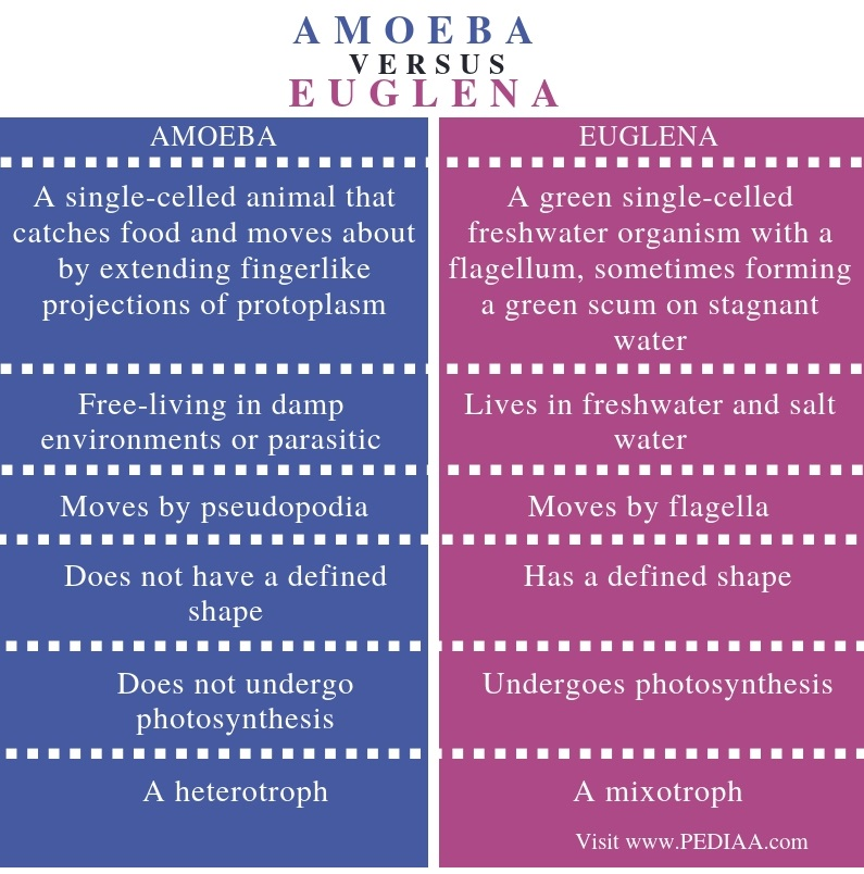 Difference Between Amoeba and Euglena - Comparison Summary