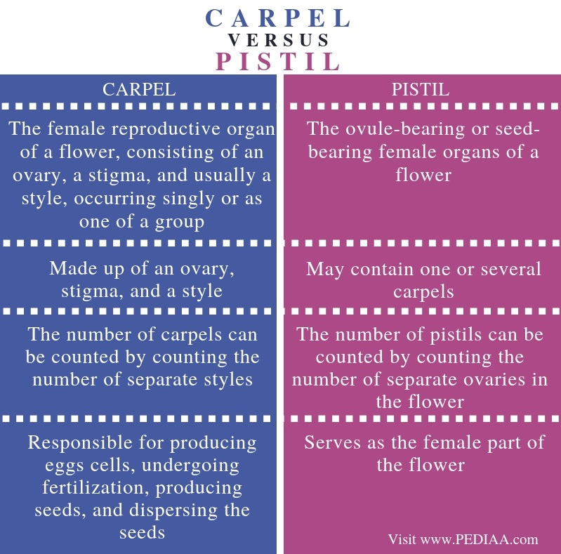 Difference Between Carpel and Pistil - Comparison Summary