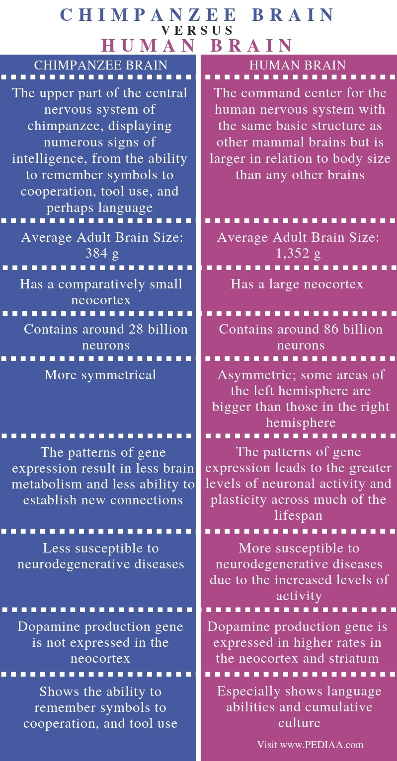 Difference Between Chimpanzee Brain and Human Brain - Comparison Summary