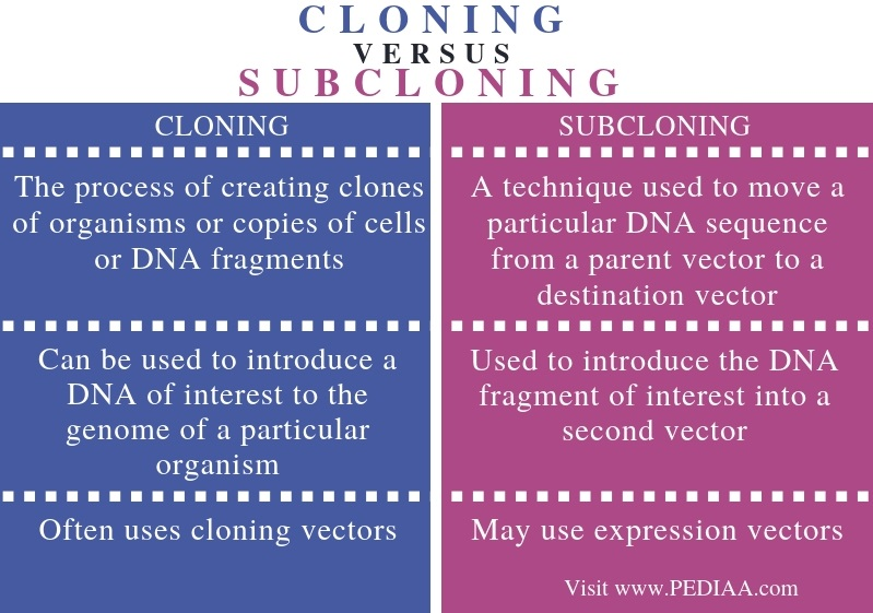 Difference Between Cloning and Subcloning - Comparison Summary