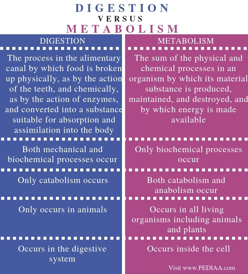 Difference Between Digestion and Metabolism - Comparison Summary