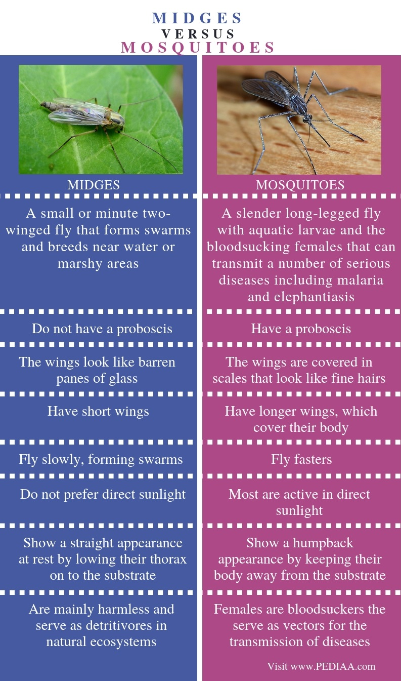 Difference Between Midges and Mosquitoes - Comparison Summary