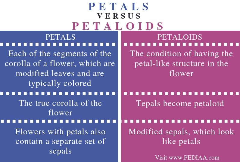 Difference Between Petals and Petaloids - Comparison Summary