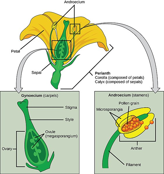 What is the Difference Between Carpel and Pistil
