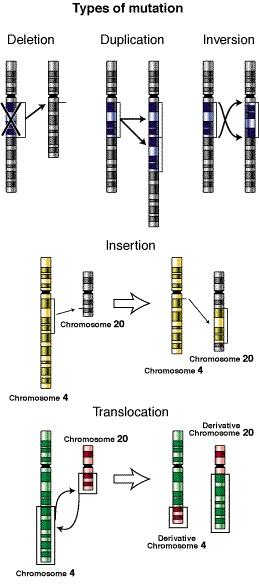 Evolution vs Mutation
