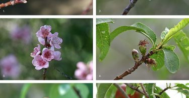 Difference Between Flower and Fruit