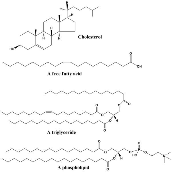 Lipids vs Cholesterol
