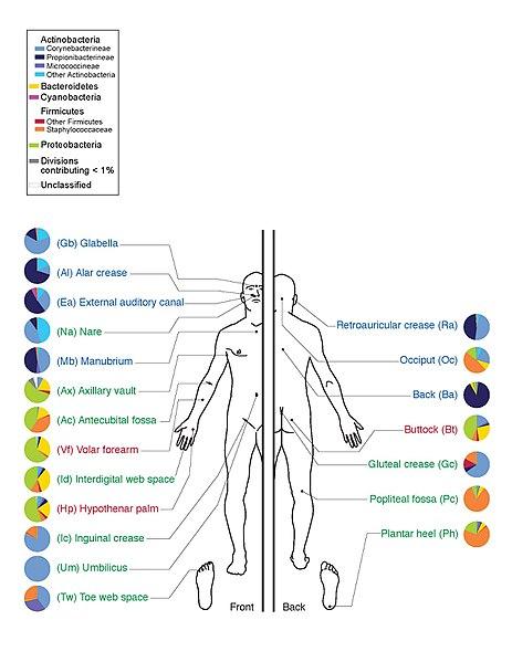 Microbiome vs Microbiota