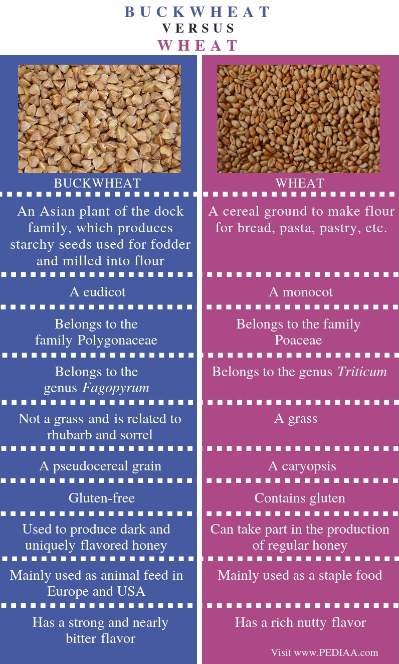 Difference Between Buckwheat and Wheat - Comparison Summary