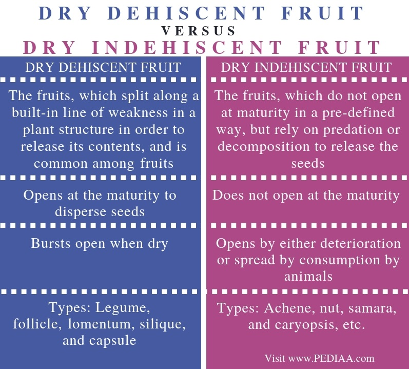 Difference Between Dry Dehiscent and Dry Indehiscent Fruit - Comparison Summary