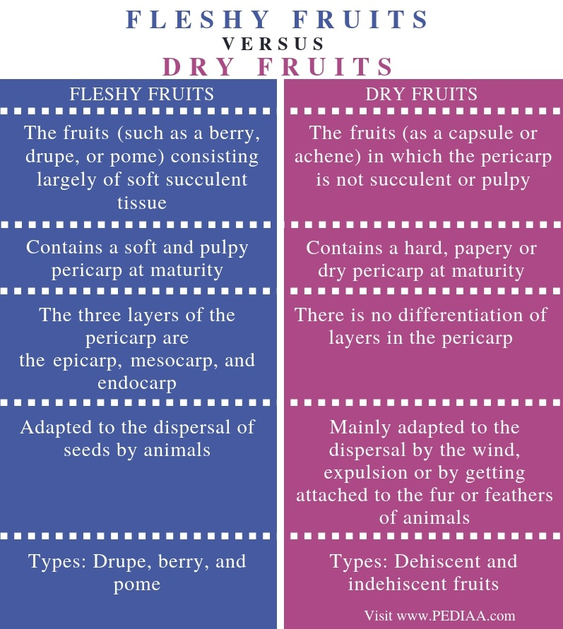 Difference Between Fleshy and Dry Fruits - Comparison Summary