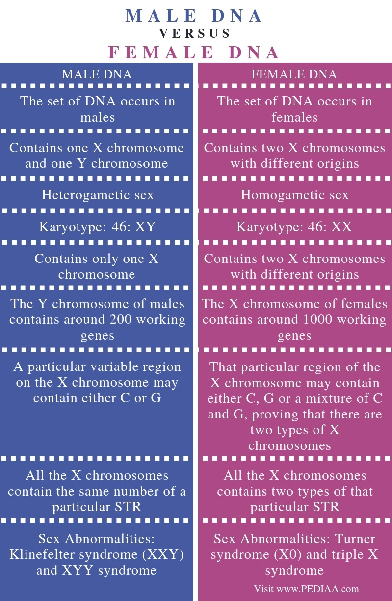 Difference Between Male and Female DNA - Comparison Summary