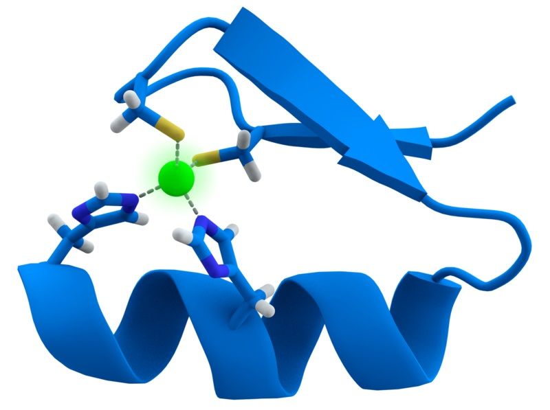 Difference Between Motif and Domain in Protein Structure