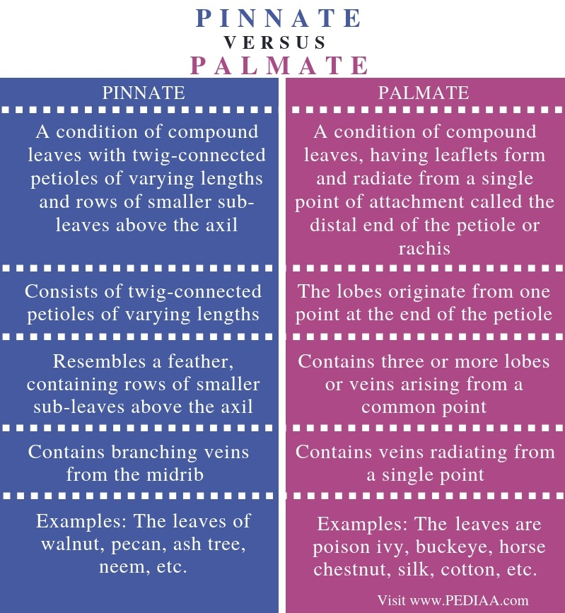 Difference Between Pinnate and Palmate - Comparison Summary