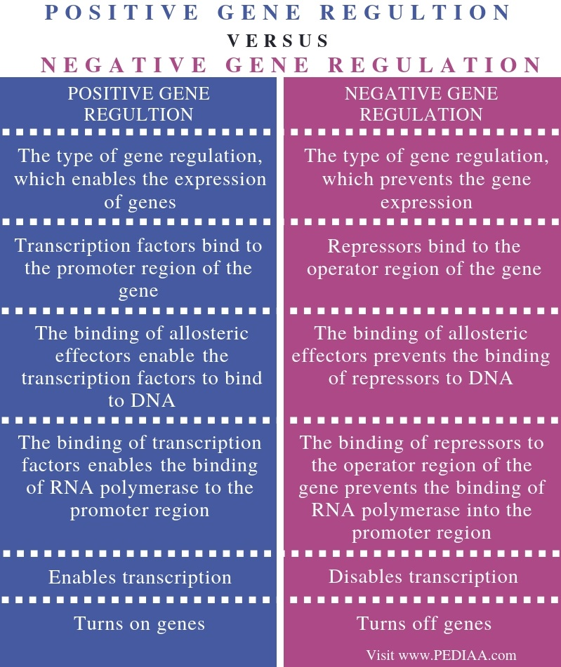 Difference Between Positive and Negative Gene Regulation - Comparison Summary
