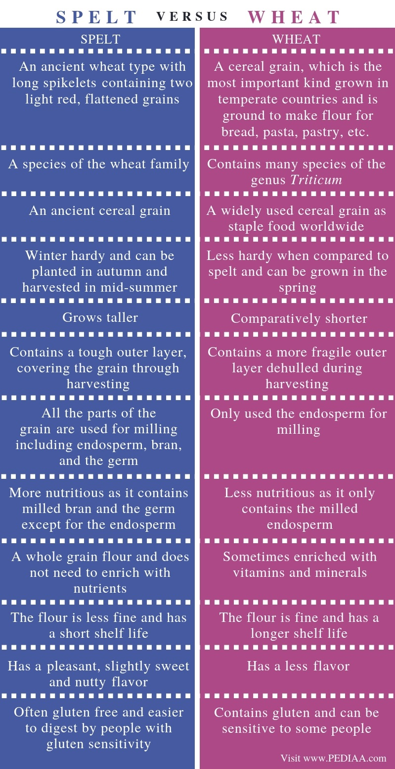 Difference Between Spelt and Wheat - Comparison Summary