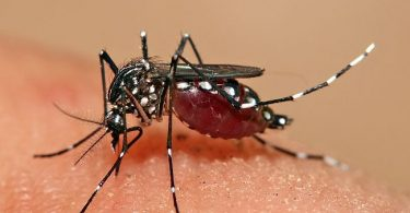 What is the Difference Between Aedes and Anopheles Mosquito