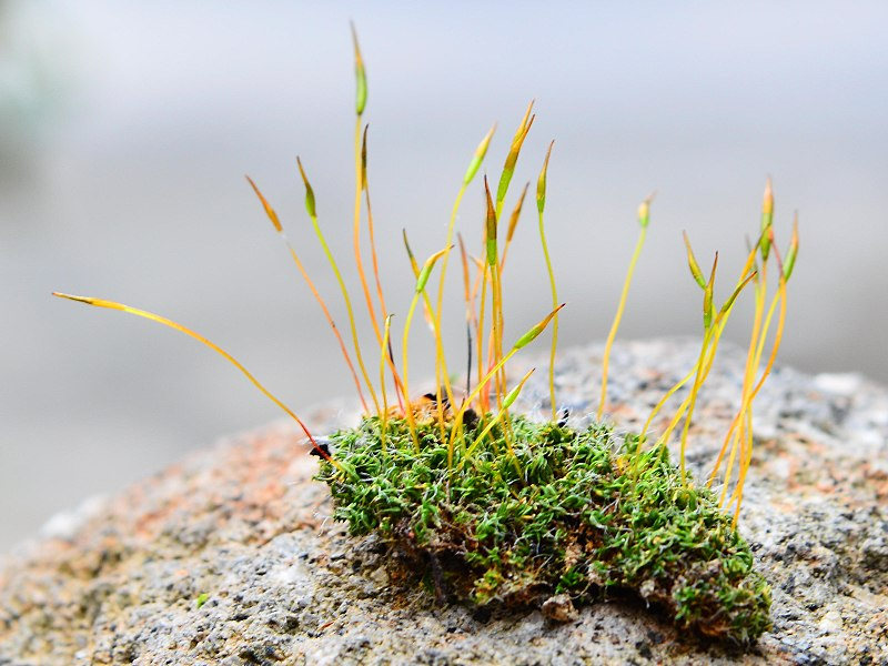 Algae vs Moss