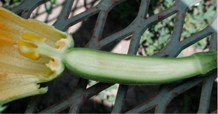 Hypogynous vs Epigynous Flower