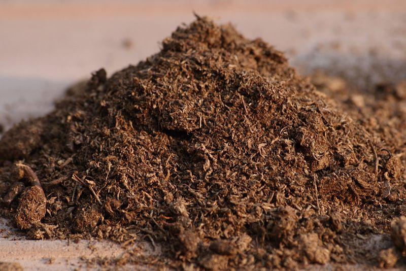 Peat Moss vs Sphagnum Moss