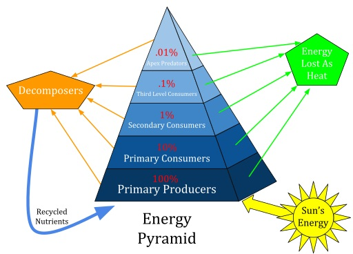 Difference Between Primary Secondary and Tertiary Consumers