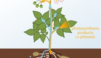 Difference Between Transportation and Transpiration