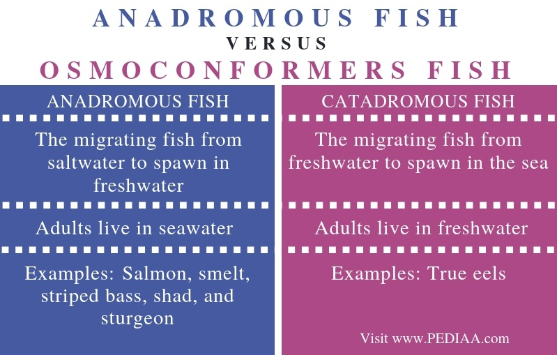 Difference Between Anadromous and Catadromous Fish - Comparison Summary