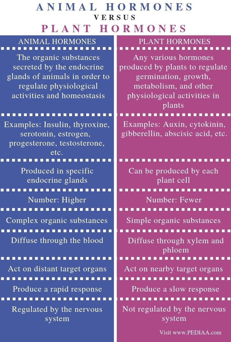 Difference Between Animal and Plant Hormones - Comparison Summary