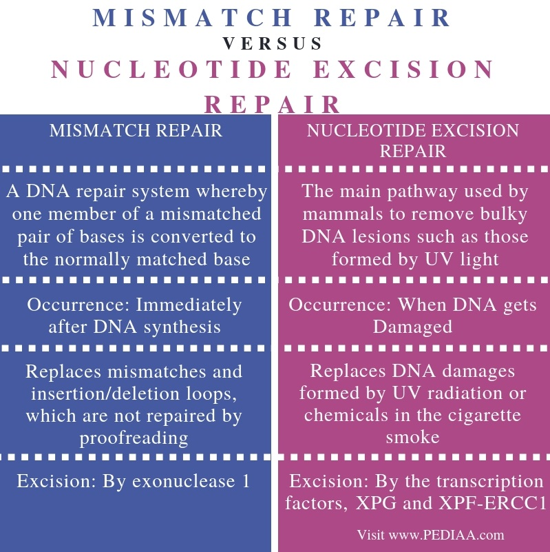 Difference Between Mismatch Repair and Nucleotide Excision Repair - Comparison Summary