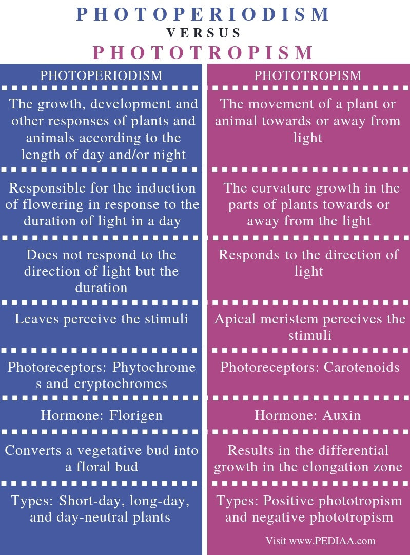 Difference Between Photoperiodism and Phototropism - Comparison Summary